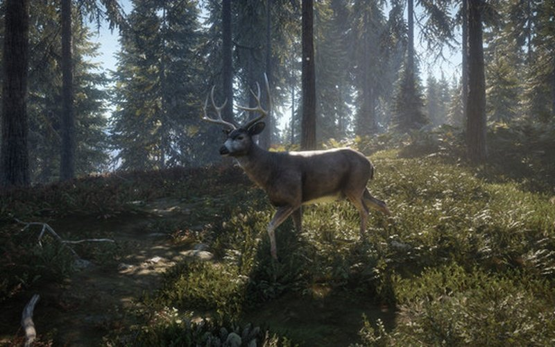 theHunter: Call of the Wild GLOBAL Edition